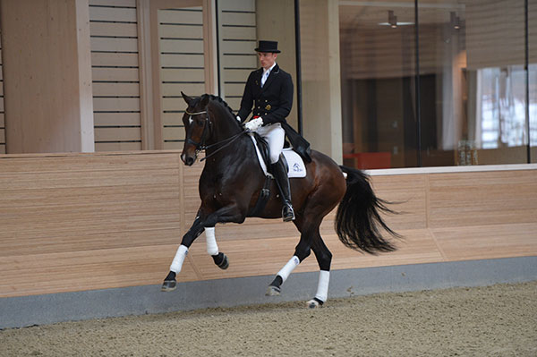 Zack Proclaimed Danish Stallion of the Year 2014