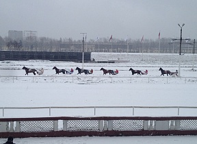 Trotters tests on Central Moscow Hippodrome