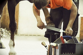 Tips and precautions for horseshoeing