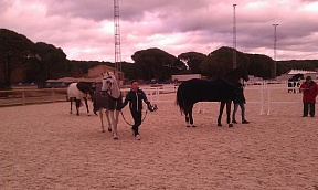 Vidauban Dressage Festival: first results