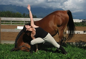 Horse abilities, or how an arab steed learned yoga