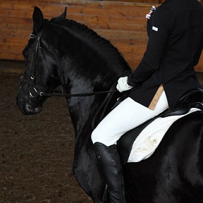 Importance of equipment for a horse and a rider