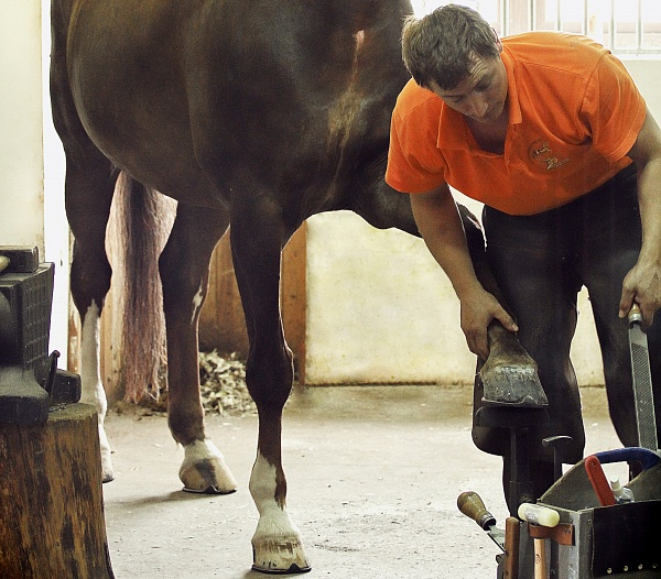 How to recognize an experienced farrier
