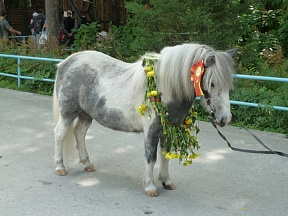 The most beautiful horse chosen in Novosibirsk